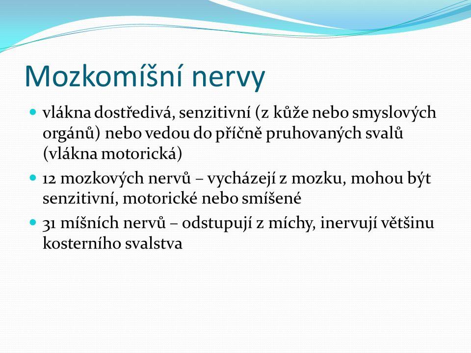 Mozkomíšní nervy vlákna dostředivá, senzitivní (z kůže nebo smyslových orgánů) nebo vedou do příčně pruhovaných svalů (vlákna motorická) 12 mozkových