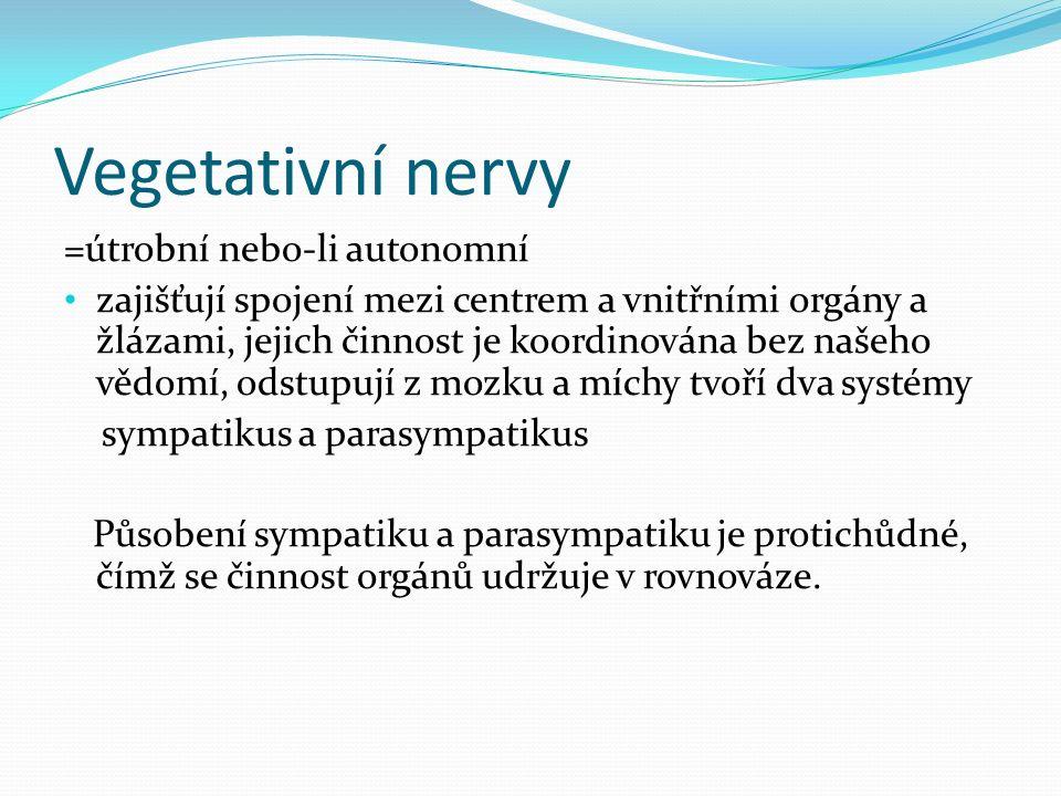 Vegetativní nervy =útrobní nebo-li autonomní zajišťují spojení mezi centrem a vnitřními orgány a žlázami, jejich činnost je koordinována bez našeho vě