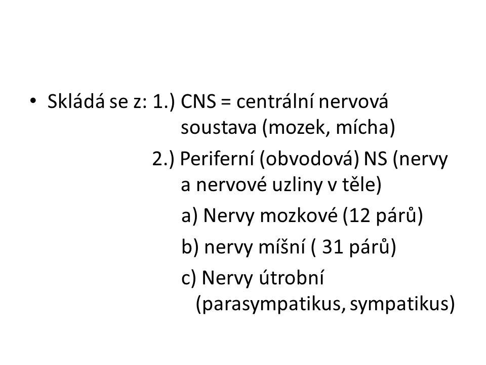 Skládá se z: 1.) CNS = centrální nervová soustava (mozek, mícha) 2.) Periferní (obvodová) NS (nervy a nervové uzliny v těle) a) Nervy mozkové (12 párů