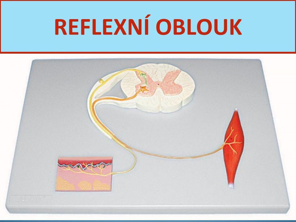 Nervová soustava10 REFLEXNÍ OBLOUK