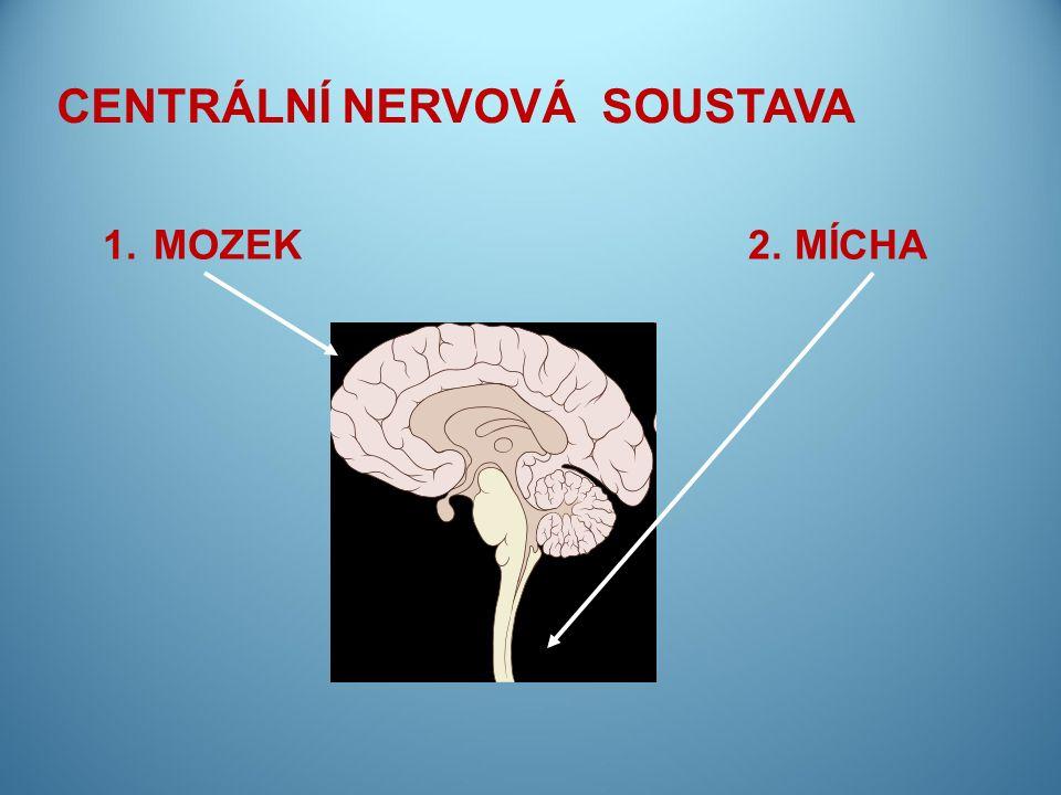CENTRÁLNÍ NERVOVÁ SOUSTAVA 1. MOZEK 2. MÍCHA