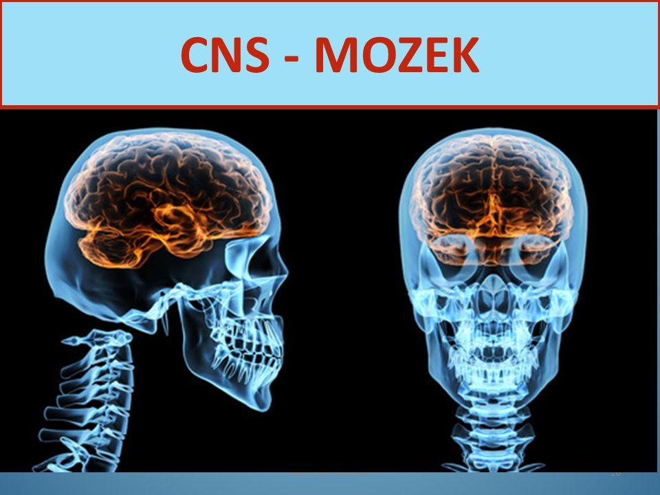 Nervová soustava16 CNS - MOZEK
