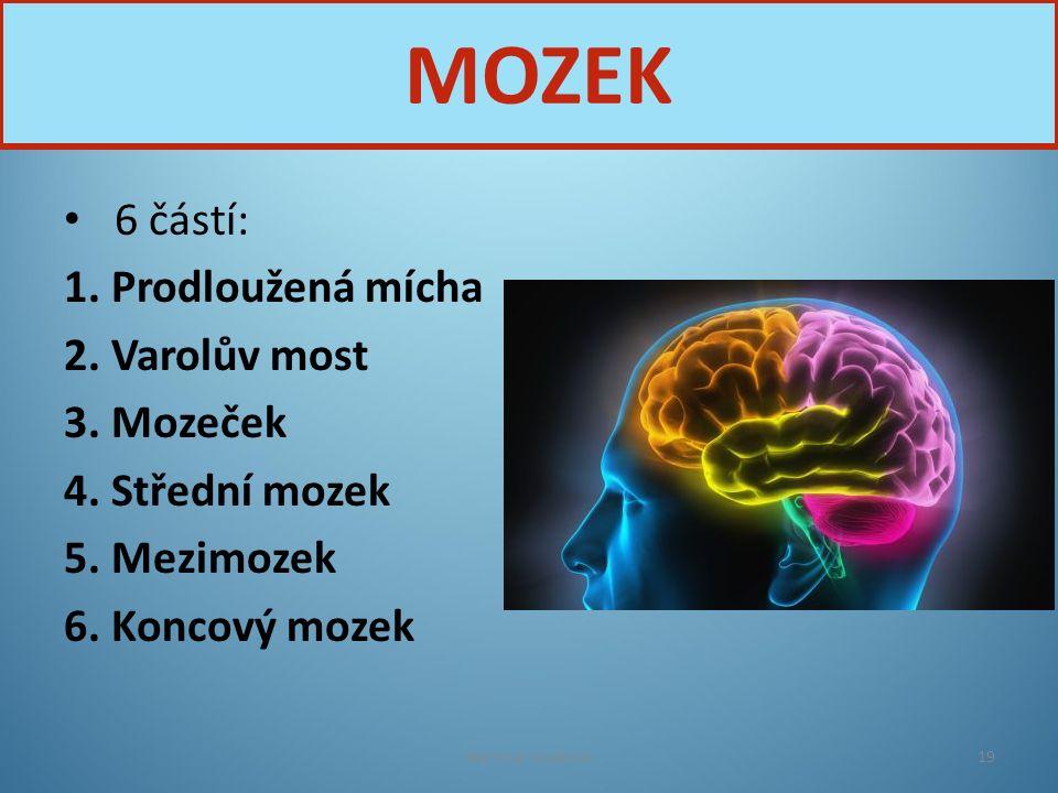 6 částí: 1. Prodloužená mícha 2. Varolův most 3. Mozeček 4. Střední mozek 5. Mezimozek 6. Koncový mozek Nervová soustava19 MOZEK