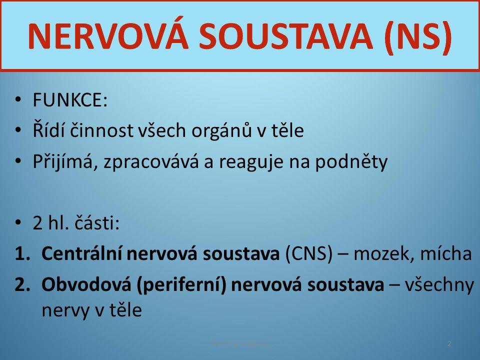 Nervová soustava3