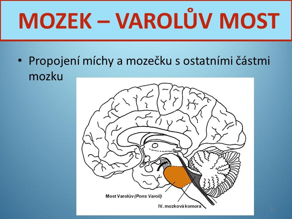 Propojení míchy a mozečku s ostatními částmi mozku Nervová soustava21 MOZEK – VAROLŮV MOST