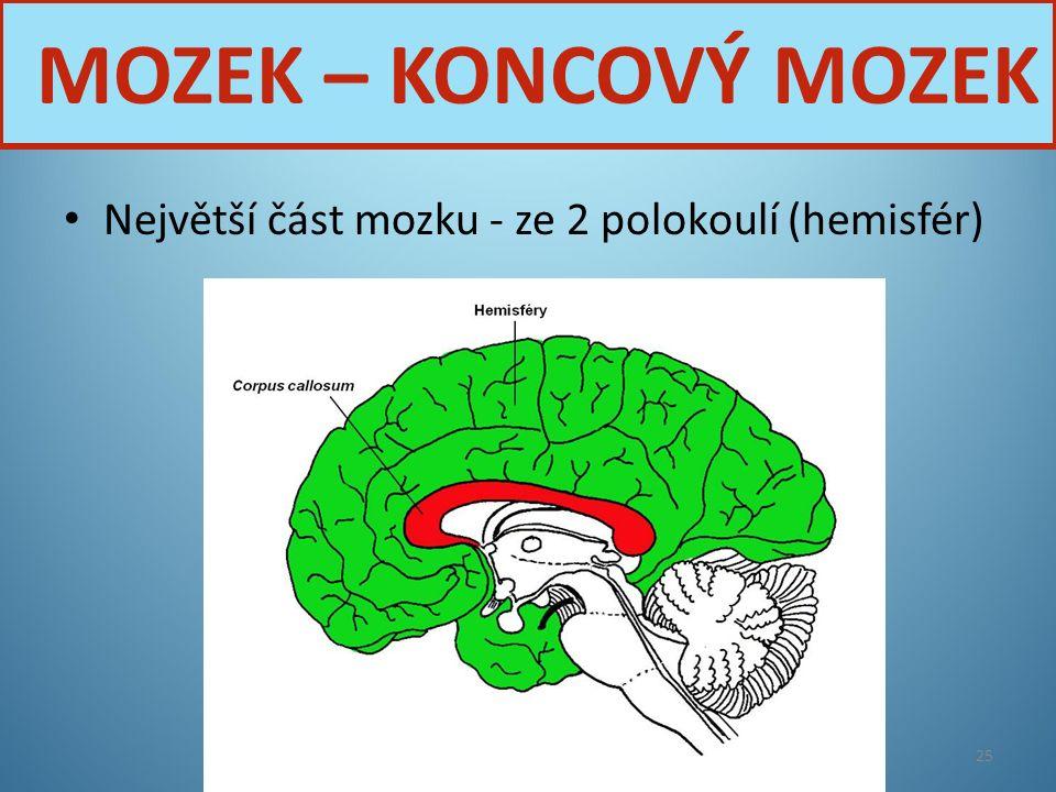 Největší část mozku - ze 2 polokoulí (hemisfér) Nervová soustava25 MOZEK – KONCOVÝ MOZEK