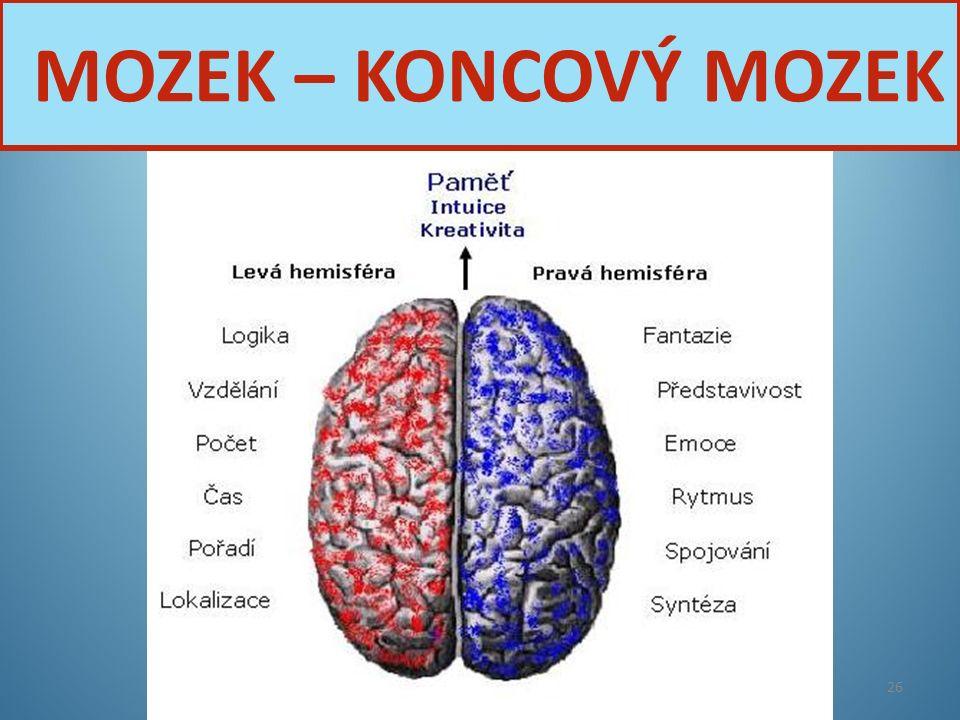 Nervová soustava26 MOZEK – KONCOVÝ MOZEK