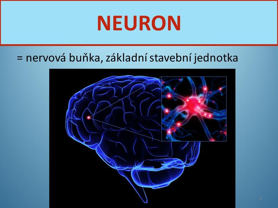 TĚLO NEURONU JÁDRO DENDRITY − KRÁTKÉ VÝBĚŽKY NEURIT − DLOUHÝ VÝBĚŽEK MYELINOVÁ POCHVA ZAKONČENÍ NEURITU STAVBA NEURONU