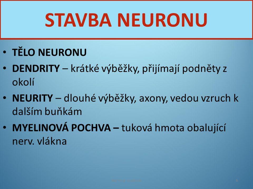 TĚLO NEURONU DENDRITY – krátké výběžky, přijímají podněty z okolí NEURITY – dlouhé výběžky, axony, vedou vzruch k dalším buňkám MYELINOVÁ POCHVA – tuk