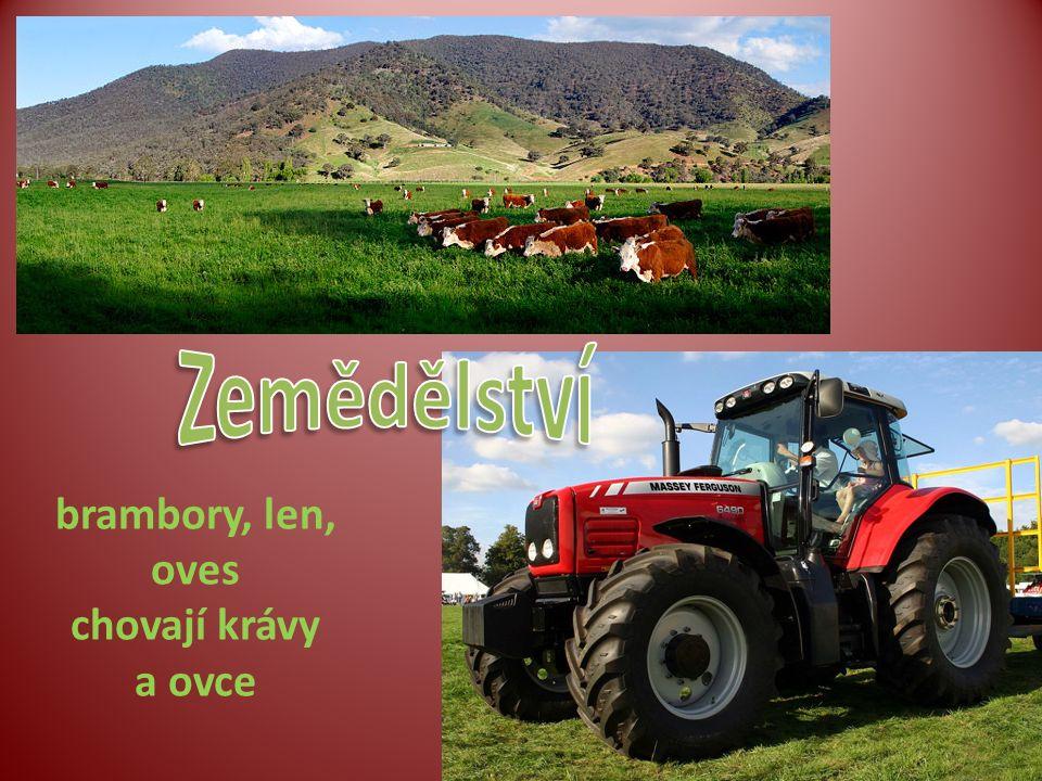 brambory, len, oves chovají krávy a ovce