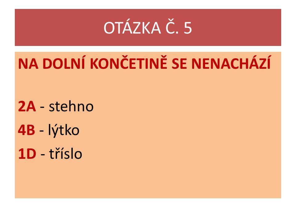 OTÁZKA Č. 5 NA DOLNÍ KONČETINĚ SE NENACHÁZÍ 2A - stehno 4B - lýtko 1D - tříslo