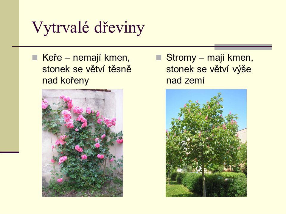 Vytrvalé dřeviny Keře – nemají kmen, stonek se větví těsně nad kořeny Stromy – mají kmen, stonek se větví výše nad zemí