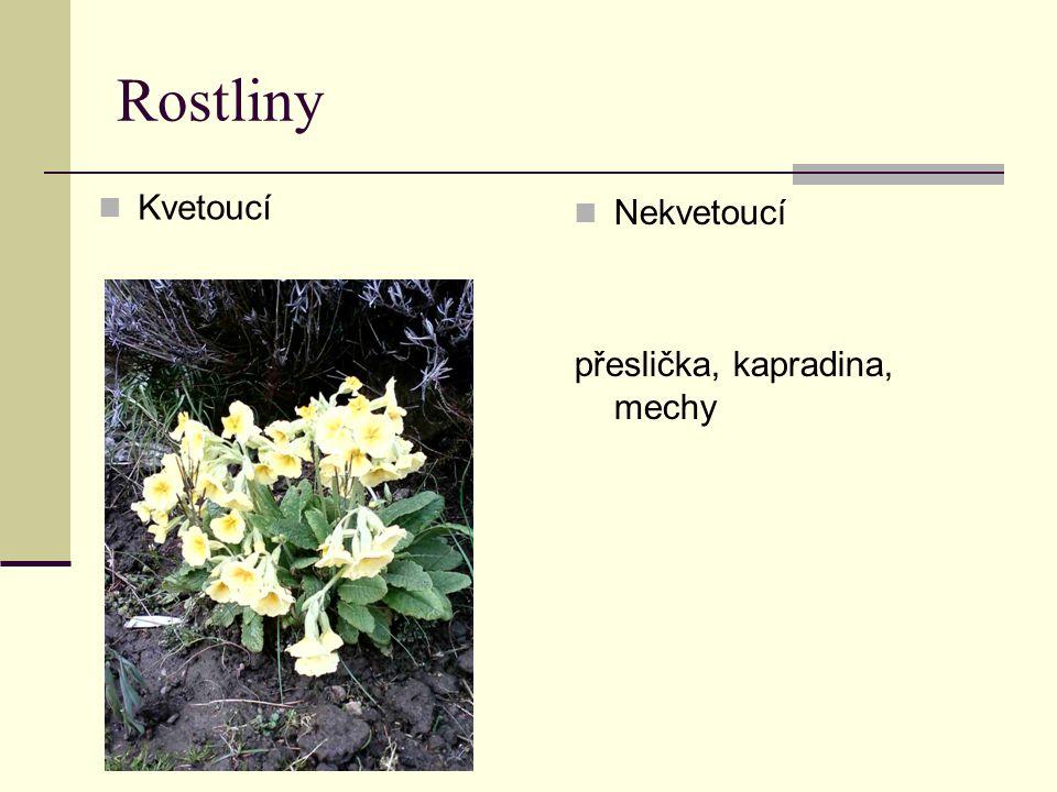 Rostliny Kvetoucí Nekvetoucí přeslička, kapradina, mechy