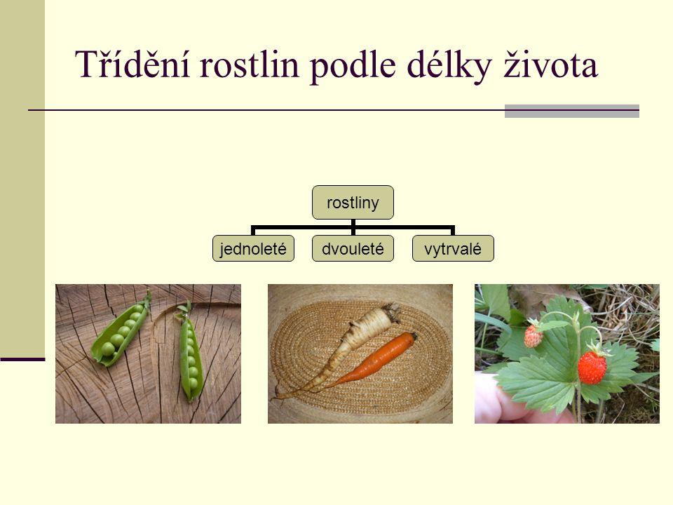 Třídění rostlin podle délky života rostliny jednoletédvouletévytrvalé