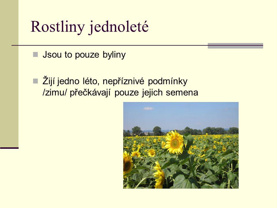 Rostliny jednoleté Jsou to pouze byliny Žijí jedno léto, nepříznivé podmínky /zimu/ přečkávají pouze jejich semena