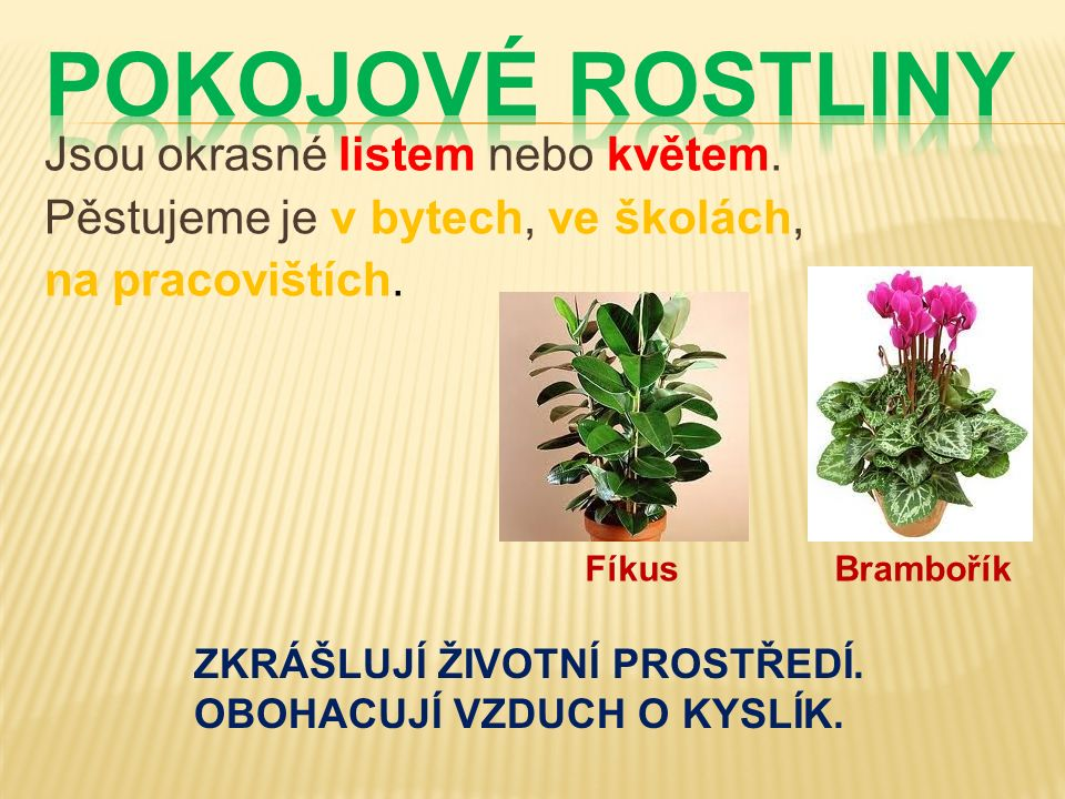 Jsou okrasné listem nebo květem.Pěstujeme je v bytech, ve školách, na pracovištích.