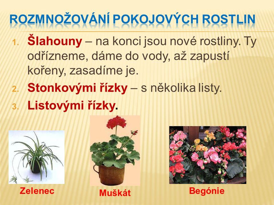 1. Šlahouny – na konci jsou nové rostliny. Ty odřízneme, dáme do vody, až zapustí kořeny, zasadíme je. 2. Stonkovými řízky – s několika listy. 3. List