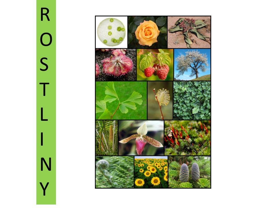 ROSTLINYROSTLINY