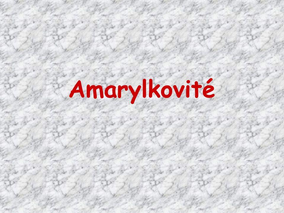 Doplňte věty: Amarylkovité rostliny mají ………pohlavné květy.