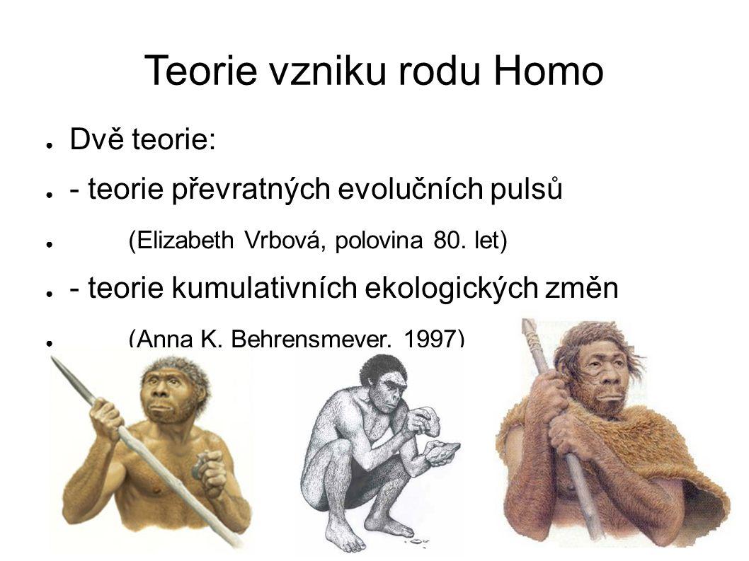 Teorie vzniku rodu Homo ● Dvě teorie: ● - teorie převratných evolučních pulsů ● (Elizabeth Vrbová, polovina 80.