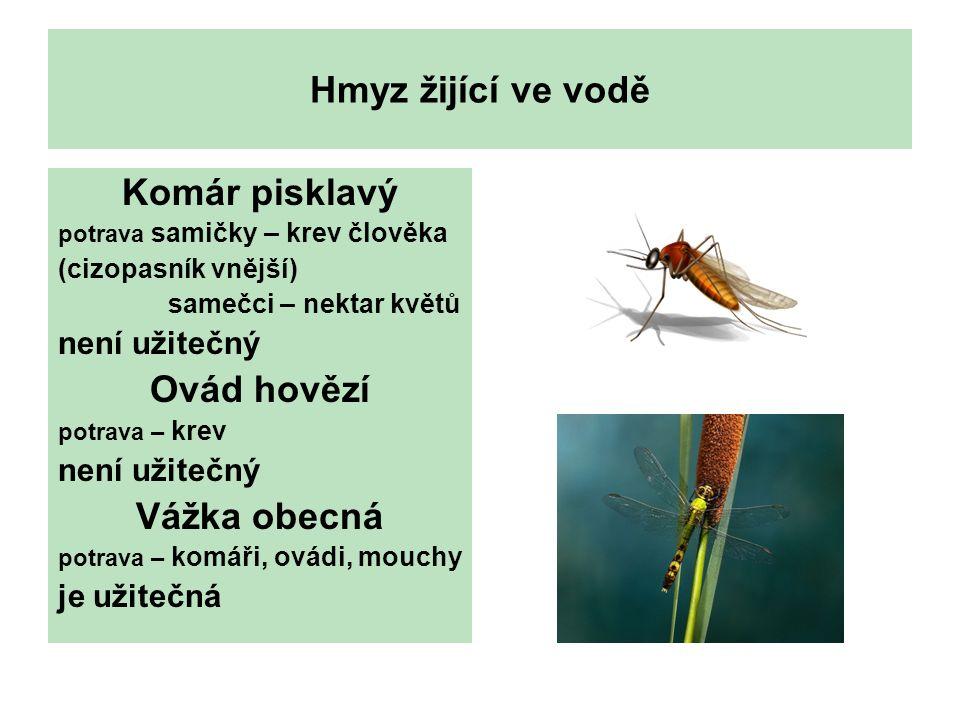 Hmyz žijící ve vodě Komár pisklavý potrava samičky – krev člověka (cizopasník vnější) samečci – nektar květů není užitečný Ovád hovězí potrava – krev není užitečný Vážka obecná potrava – komáři, ovádi, mouchy je užitečná