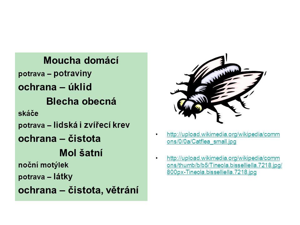 Moucha domácí potrava – potraviny ochrana – úklid Blecha obecná skáče potrava – lidská i zvířecí krev ochrana – čistota Mol šatní noční motýlek potrava – látky ochrana – čistota, větrání http://upload.wikimedia.org/wikipedia/comm ons/0/0a/Catflea_small.jpghttp://upload.wikimedia.org/wikipedia/comm ons/0/0a/Catflea_small.jpg http://upload.wikimedia.org/wikipedia/comm ons/thumb/b/b5/Tineola.bisselliella.7218.jpg/ 800px-Tineola.bisselliella.7218.jpghttp://upload.wikimedia.org/wikipedia/comm ons/thumb/b/b5/Tineola.bisselliella.7218.jpg/ 800px-Tineola.bisselliella.7218.jpg
