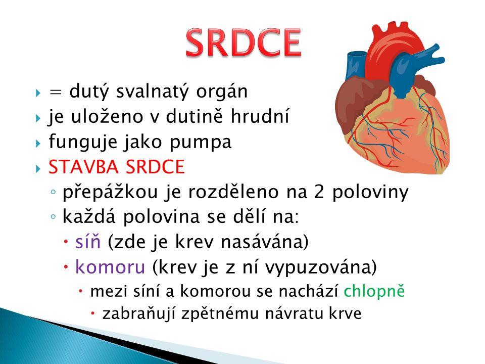 horní dutá žíla dolní dutá žíla pravá síň levá síň pravá komora levá komora chlopně srdečnice (aorta) přepážka plicní tepna