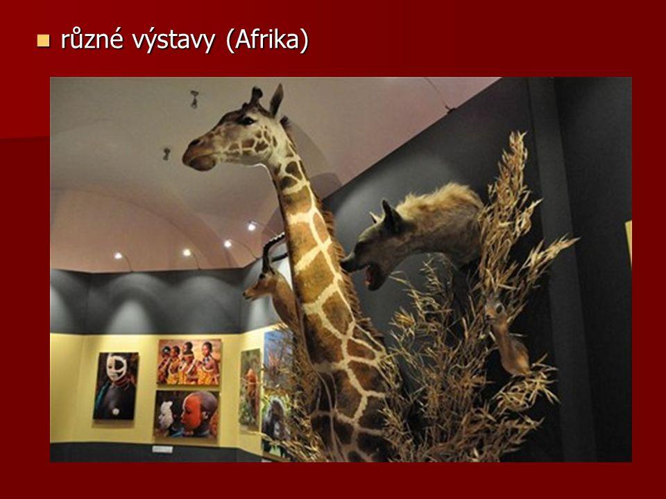 různé výstavy (Afrika) různé výstavy (Afrika)