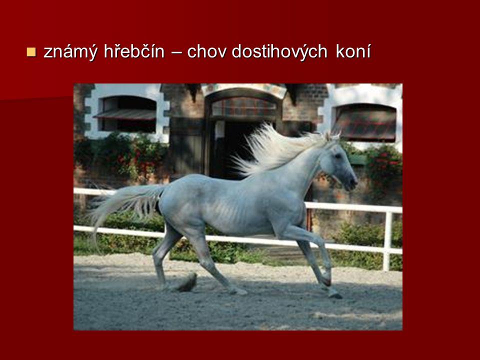 známý hřebčín – chov dostihových koní známý hřebčín – chov dostihových koní