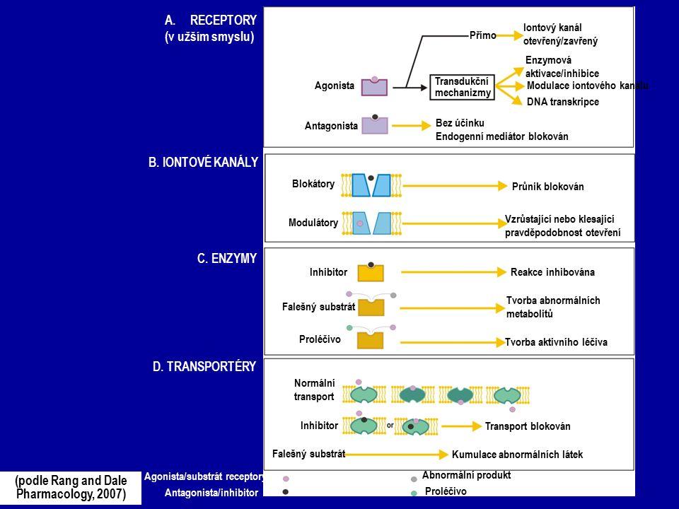 A.RECEPTORY (v užším smyslu) B. IONTOVÉ KANÁLY C. ENZYMY D. TRANSPORTÉRY Agonista Antagonista Přímo Transdukční mechanizmy Bez účinku Endogenní mediát