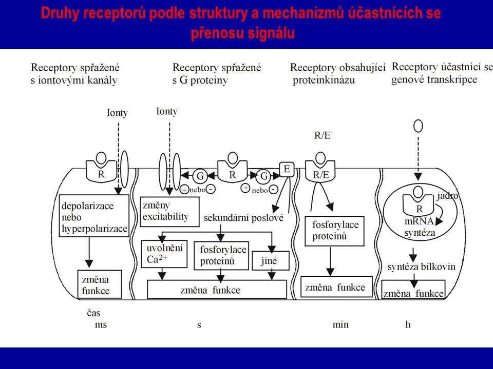 Druhy receptorů podle struktury a mechanizmů účastnících se přenosu signálu