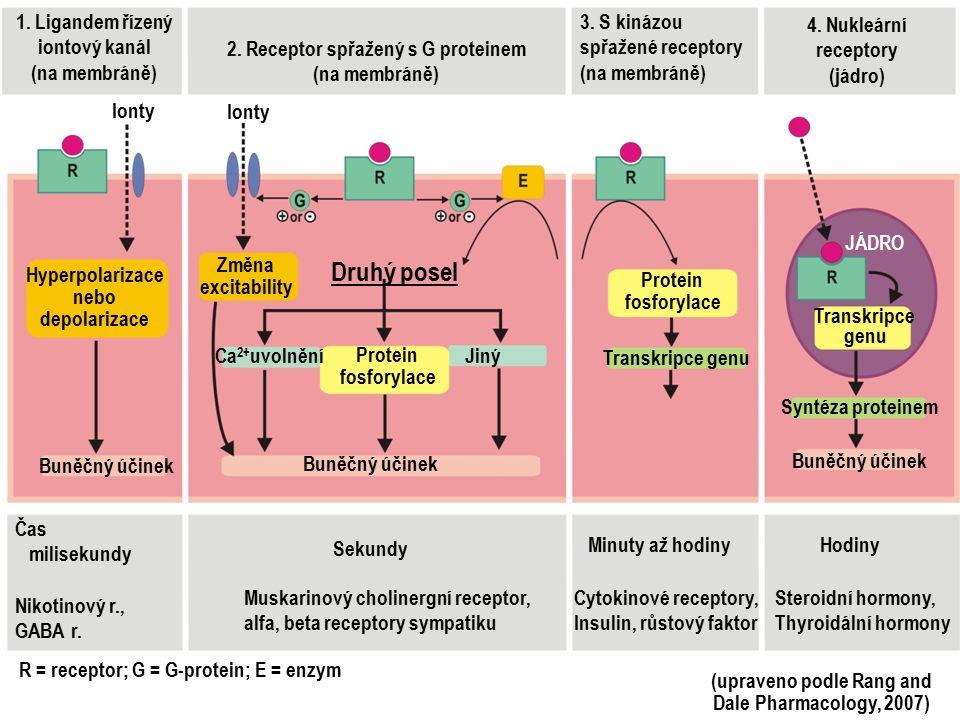 1. Ligandem řízený iontový kanál (na membráně) 2. Receptor spřažený s G proteinem (na membráně) 3. S kinázou spřažené receptory (na membráně) 4. Nukle