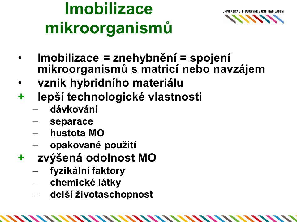 Imobilizace mikroorganismů Imobilizace = znehybnění = spojení mikroorganismů s matricí nebo navzájem vznik hybridního materiálu +lepší technologické v