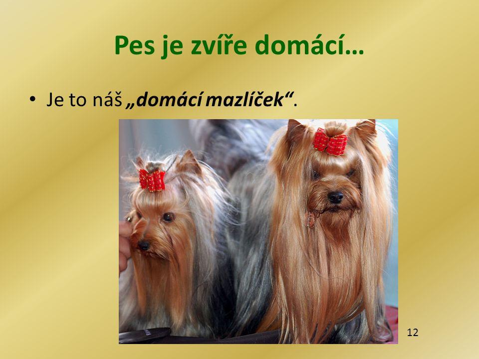 """Pes je zvíře domácí… Je to náš """"domácí mazlíček"""". 12"""