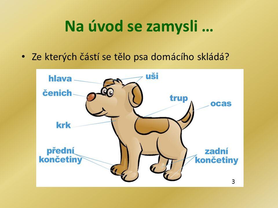 Na úvod se zamysli … Ze kterých částí se tělo psa domácího skládá? 3