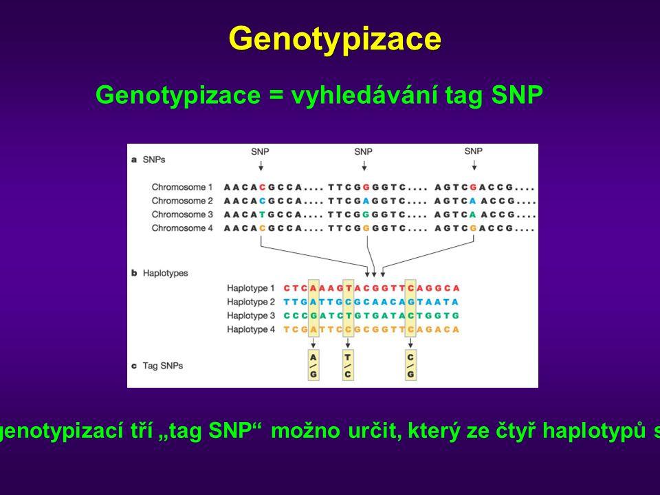 """Genotypizace Genotypizace = vyhledávání tag SNP V vedeném příkladu je genotypizací tří """"tag SNP možno určit, který ze čtyř haplotypů se vyskytuje u probanda"""