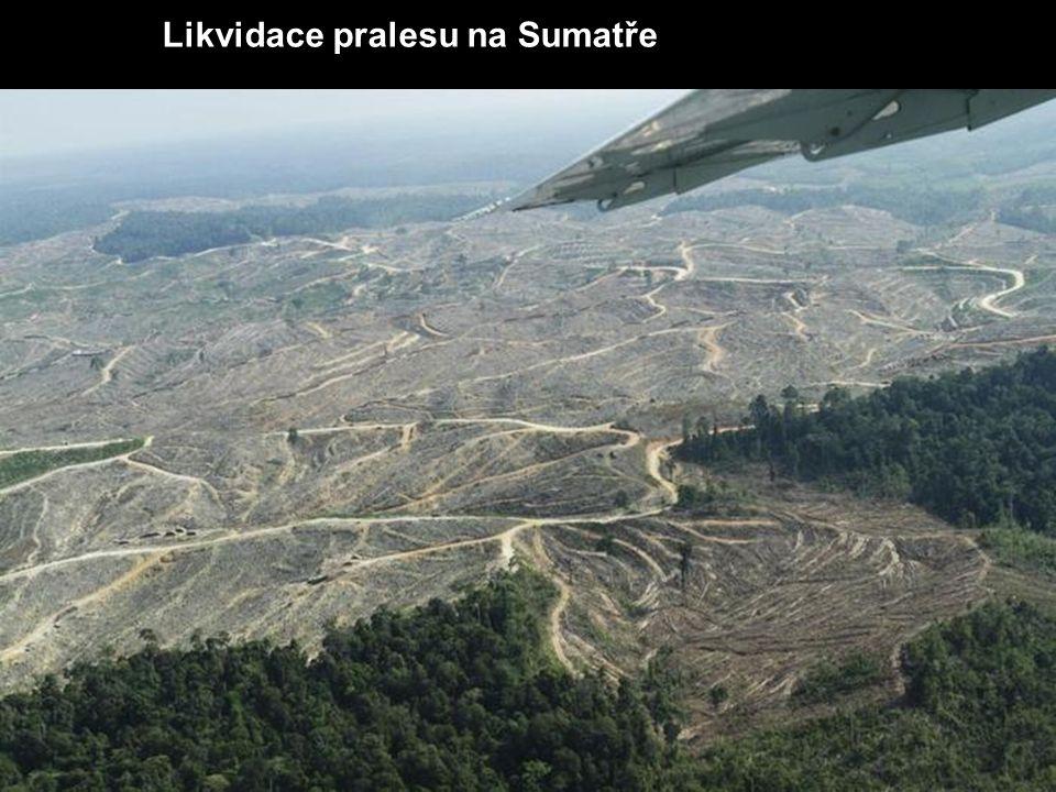 Likvidace pralesu na Sumatře