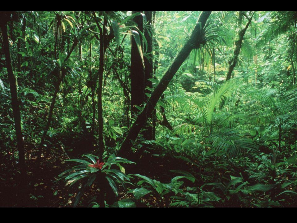 Ptáci pralesů Harpyje pralesní