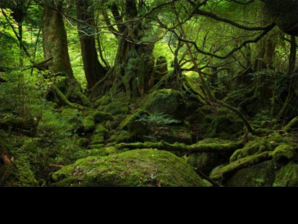 Obojživelníci pralesů