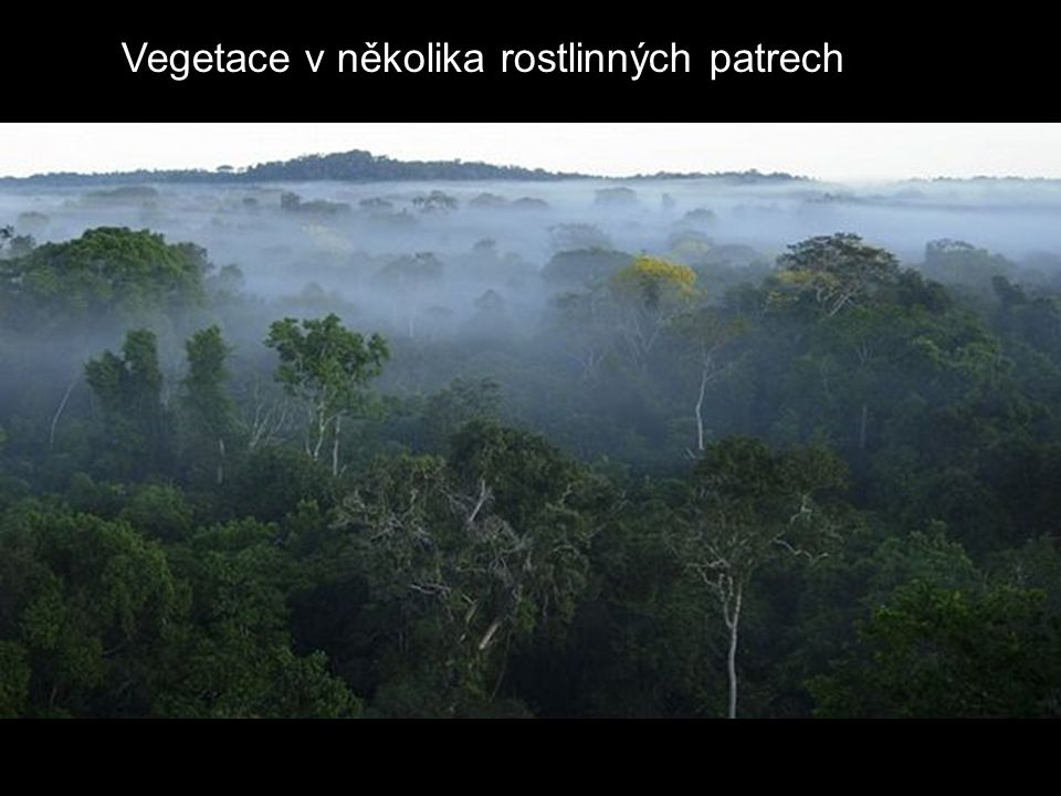 Vegetace v několika rostlinných patrech