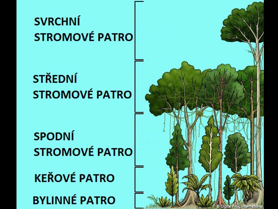 Světový ekologický problém - kácení pralesů Pralesy jsou nezbytné pro výrobu kyslíku Každou sekundu je vykácen nebo zničen prales o velikosti fotbalového hřiště (5000m 2 ) Ročně 160 000 km 2 (2 x Česká republika) Metody – kácení, zaplavování, žďáření Důvody –zisk vzácných dřev –zisk zemědělské půdy –budování komunikací –budování přehrad –budování obcí (měst)