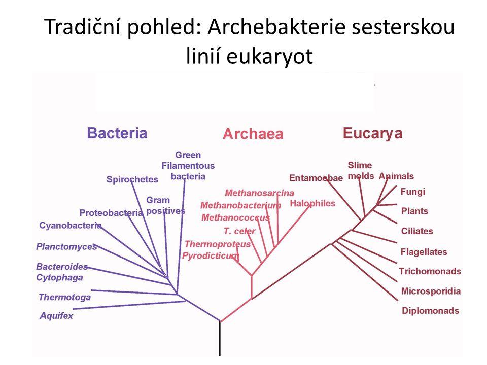 Tradiční pohled: Archebakterie sesterskou linií eukaryot