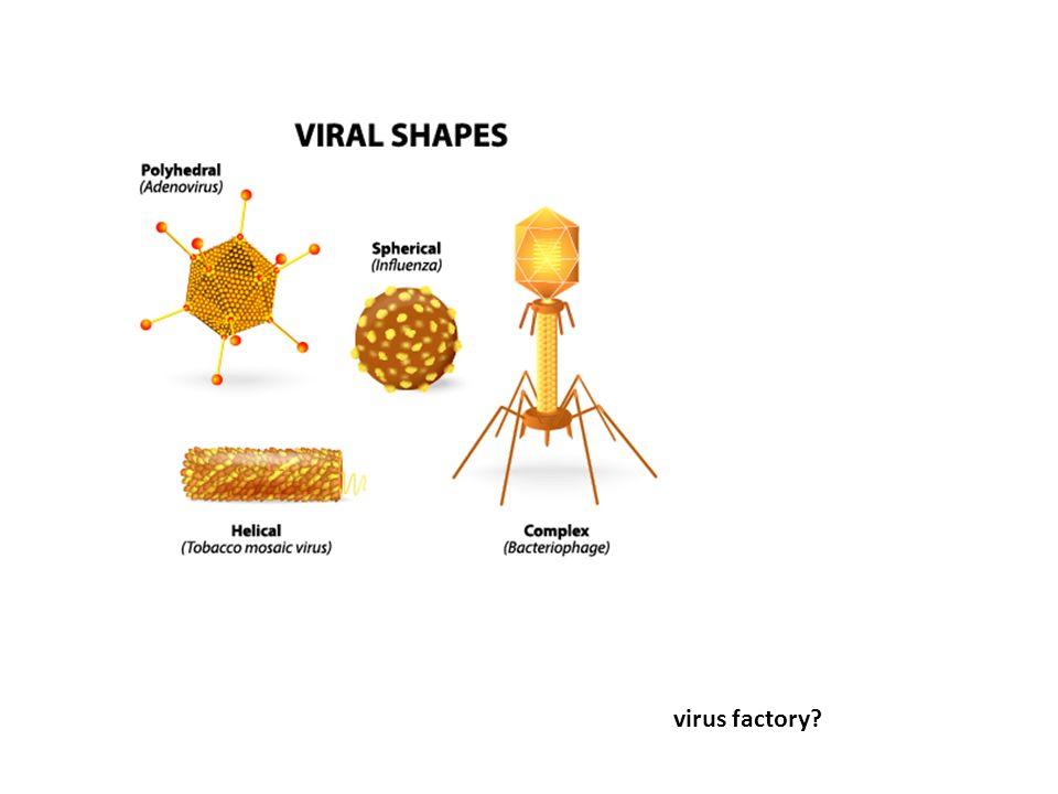 virus factory?