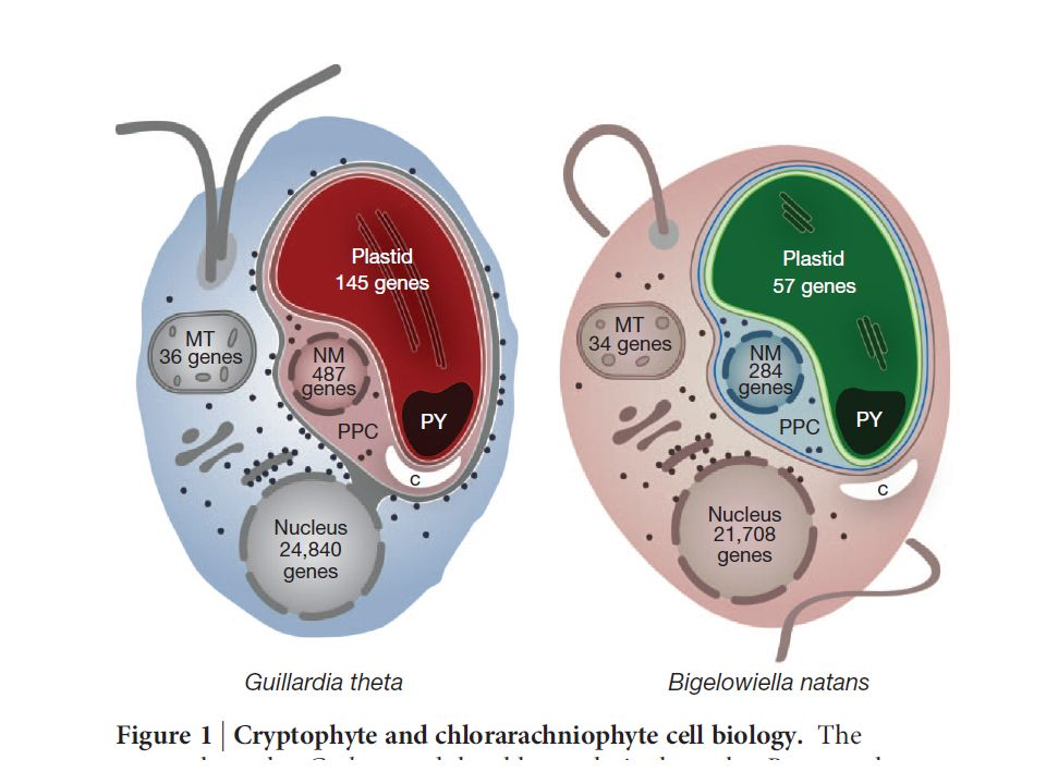 Glansdorff et al 2008 Biology Direct 2008, 3:29