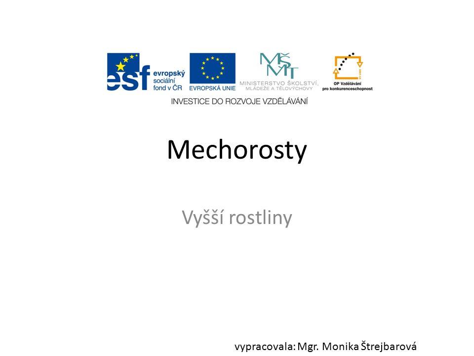 Mechorosty Vyšší rostliny vypracovala: Mgr. Monika Štrejbarová