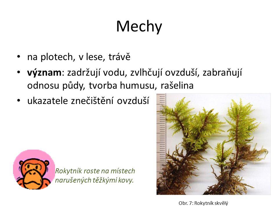 Mechy na plotech, v lese, trávě význam: zadržují vodu, zvlhčují ovzduší, zabraňují odnosu půdy, tvorba humusu, rašelina ukazatele znečištění ovzduší Obr.