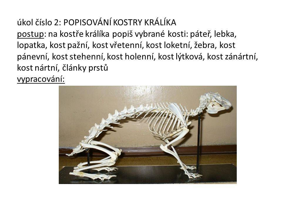 úkol číslo 2: POPISOVÁNÍ KOSTRY KRÁLÍKA postup: na kostře králíka popiš vybrané kosti: páteř, lebka, lopatka, kost pažní, kost vřetenní, kost loketní, žebra, kost pánevní, kost stehenní, kost holenní, kost lýtková, kost zánártní, kost nártní, články prstů vypracování: