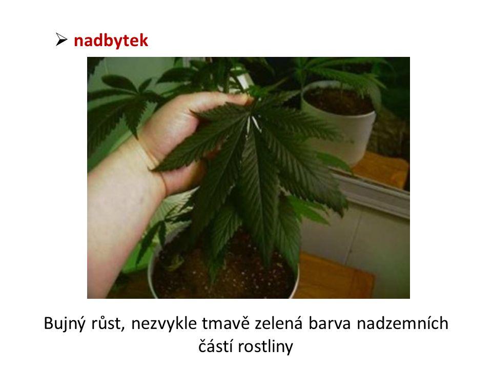  nadbytek Bujný růst, nezvykle tmavě zelená barva nadzemních částí rostliny