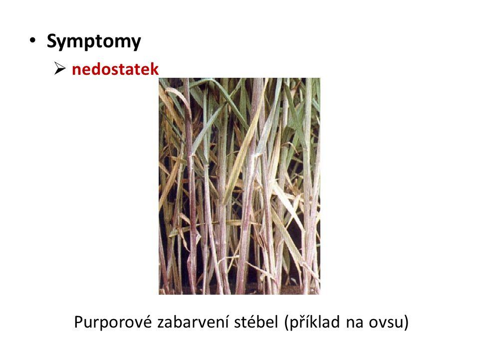 Symptomy  nedostatek Purporové zabarvení stébel (příklad na ovsu)