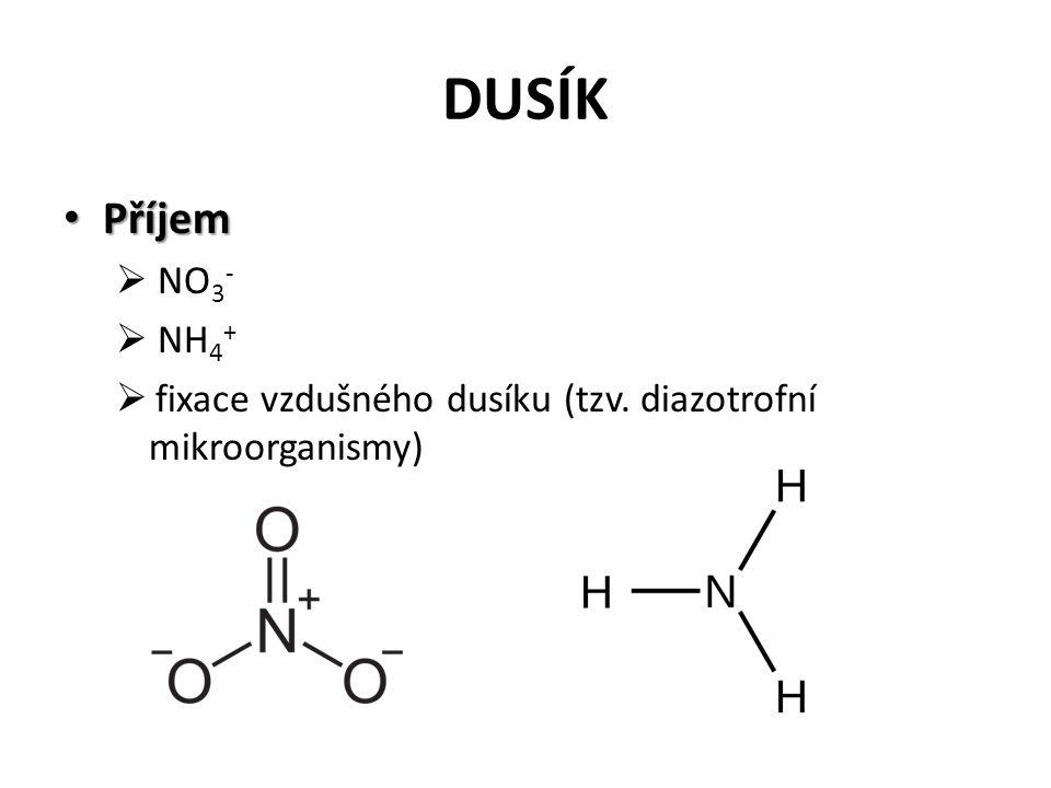 DUSÍK Příjem Příjem  NO 3 -  NH 4 +  fixace vzdušného dusíku (tzv. diazotrofní mikroorganismy)